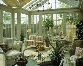 室内绿植种类与风水