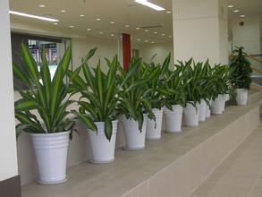 餐厅设计中空间绿化的合理搭配